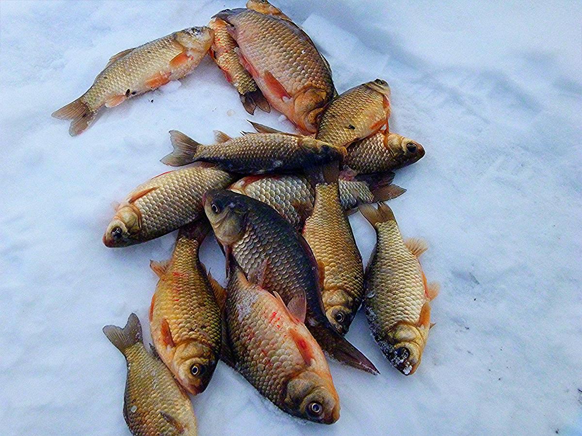 суроватиха чистые пруды рыбацкие