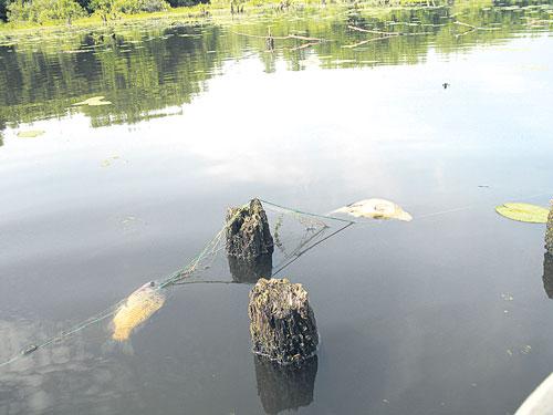 рыбалка сети тагила