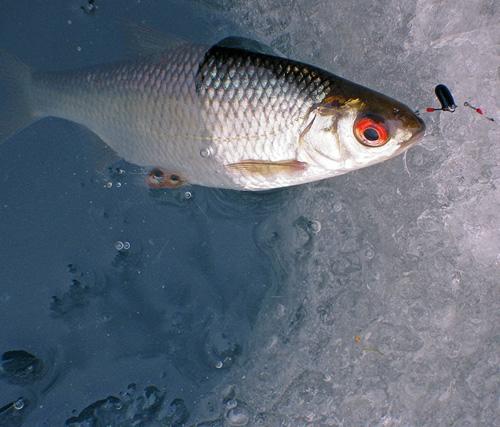 рыбалка на микробалду