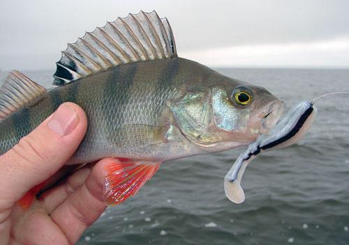 отчеты о рыбалке горьковского моря