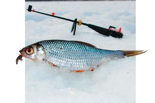 ловим рыбу на колбасу