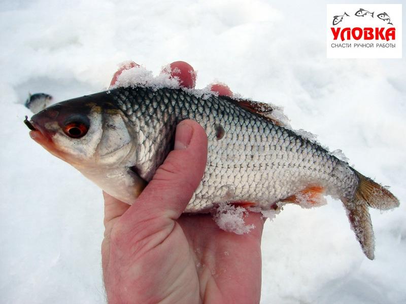 снасти для рыбалки на безнасадку