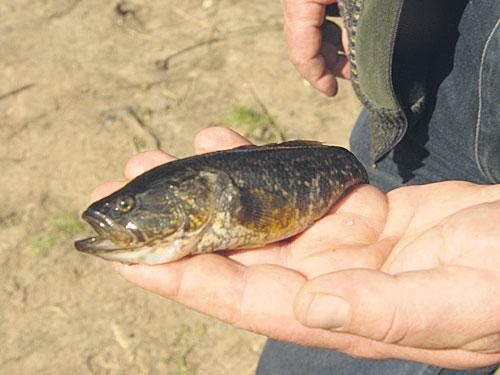 какая рыба ловится в конце июля