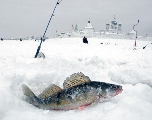 прогноз клева рыбы в нижегородской области на волга