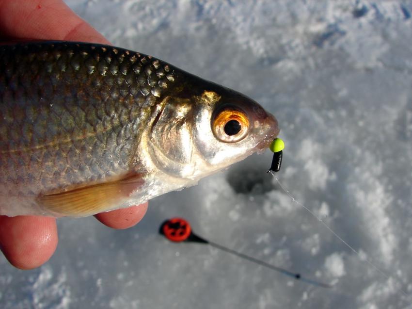гвоздика на рыбалке