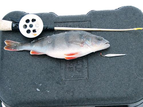 плотва рыбалка на море