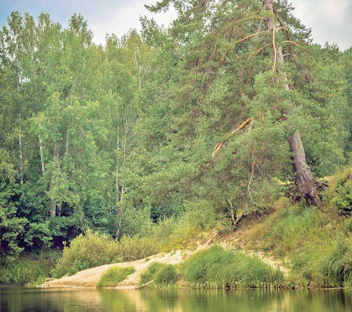Река Керженец - Сосновый плёс (Сергей Карпеев 3) / Стихи.ру   621x700