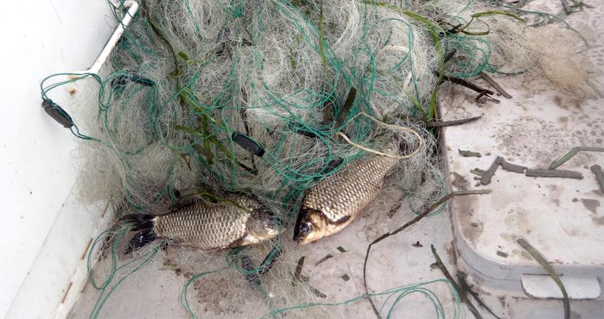 весенний запрет рыбной ловли в рязани