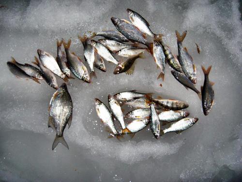 клюет ли рыба в пасмурную погоду