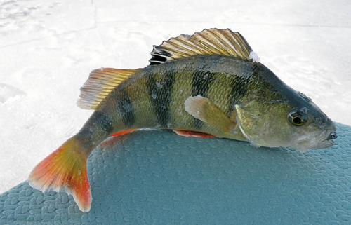 клюет ли рыба после 6 вечера