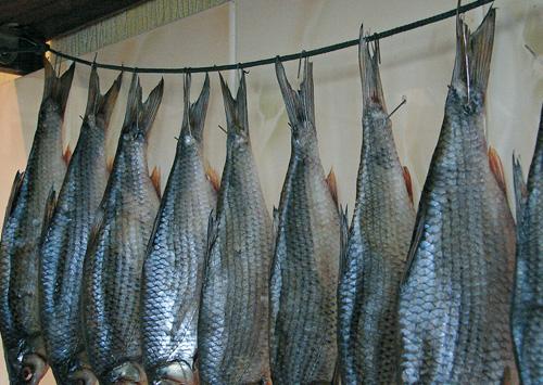 Засолка рыбы для вяления в домашних условиях