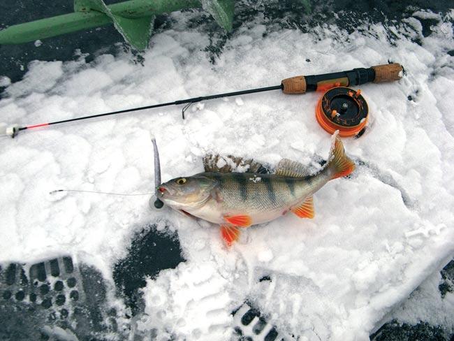 Рыбалка в отвес на окуня