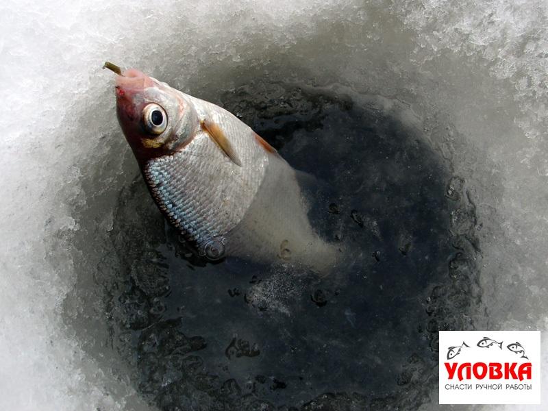ловля рыбы на кошачий глаз