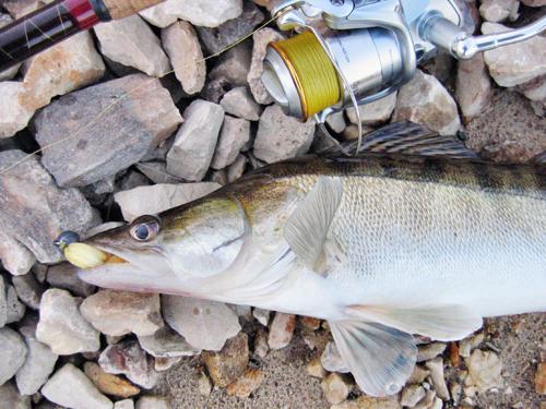 отчеты о рыбалке из разнежья